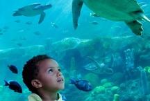 SeaWorld Orlando / by Arrive Orlando