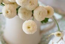to bloom / by Rachel Johnson Swan