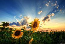 Art Inspiration- Flowers & Plants