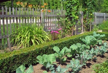 growing your own food 2