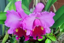 flores / decoración