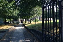 The Green Spaces at St Mary Redcliffe / A collection of images of our South Churchyard in all it's verdant magnificence.