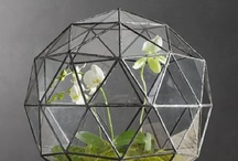 terrariums / Little green patches of earth in gorgeous glassware