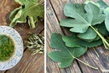 οφελη φυλλα συκιας