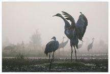 Кемери птицы