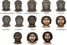 Human Evolution / by Luz Morales