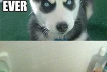 Funny animals...