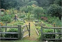 Garden Ideas / by Hollands Grove Healing