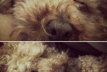 Patan / #ilovemydog par quienes amamos a nuestro compañero peludo de cuatro patas por encima de todas las cosas.