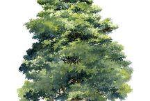 Arbres - Trees - Baume - Drzewa
