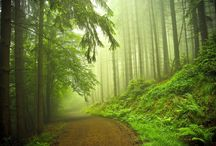 Heaven Age Forest / Do you want to see the most beautiful pictures about forest?
