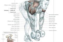 Shoulders and back workouts