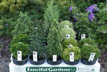 miniture plants