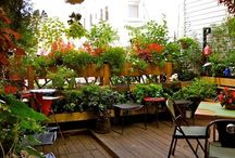 Balcony, Rooftop & Patio Gardens