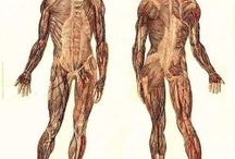 Anatomy + Physiology.