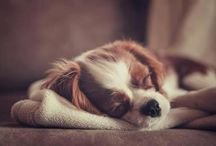 """A Man's Best Friend / """"Sometimes the smallest things take up the most room in your heart."""""""