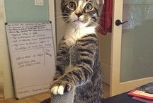 Music Business Cat...Move over grumpy cat, there's a new kitty in town / by Loren Weisman