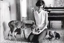 Bambi-Liebe