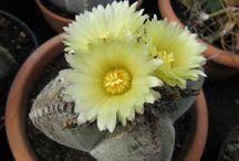 nombres de cactus