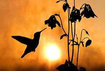 Humming Bird Paintings