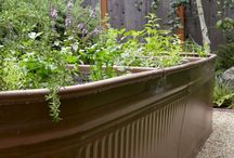Gardening / by Tina Irvin