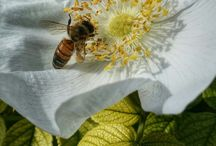 Butterfies, bugs and other... / Everything is a good motive if you love photography