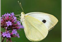 insecten en vlinders