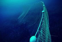 OCEAN || Overfishing and seafood challenge / What's happening in our oceans? Which fish is OK to eat? IS it still OK to eat fish? How polluted is our fish? Well researched resources to increase awareness on what's happening in the fishing industry, the oceans ecosystem, and the health of our fish and seafood