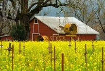 Sonoma County / The beauty and diversity of Sonoma County