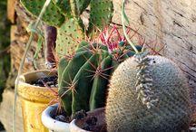 Arizona Gardens