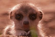 """Squee critters / Yes. I do go """"squeee!"""" in a high pitched squeaky voice. So do you. So there."""