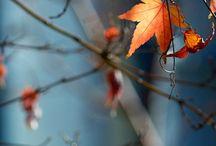 Forever Autumn. / Die (ganzjährig währende) Liebe zu goldenen Tagen wie verregnet-neblig-grauen Tagen gleichermaßen. Novemberstürme. Kürbisgerichte. Einkuscheln auf dem Sofa, mit Flauschsocken, Decke, Tee, Buch, Kerzenlicht... Gartenarbeit in Gummistiefeln. Warme Klamotten, Kuschelpullis und Schals, Stiefel und Mäntel. Ausflüge durch raschelndes Laub und sein charakteristischer Duft. Dekorieren. Die Farben...