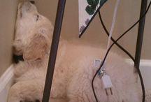 So my dog Ella!