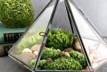terrarium drivhus