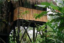 Belize Vacation / My dream vacation I've planned and had fall through several times. I will do this!  / by Jocelyn Francis