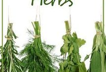 antibiotics herbs