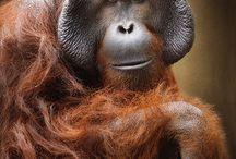Małpki / Monkeys