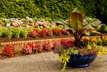 Annual Rotation  / Rotating annuals is a wonderful way to add color and interest to the garden. By blending perennials with annuals you can create a diverse planter/bed display that really pops no matter what time of year.