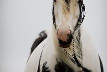 Heavenly horses / by Pamela Archer