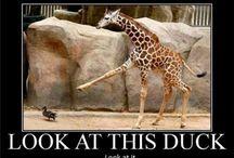 Funny Stuff / by Laurel Walsh