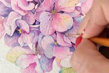 hortensia aquarel