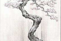 bonsai draw