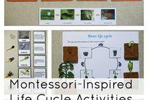 Montessori - Science / by Kylee Meyer
