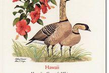 Hawaii / Travel