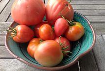 Tomaten, Garten, Natur / Meine Tomaten aus eigener Zucht
