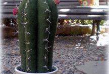 cactus pachwor