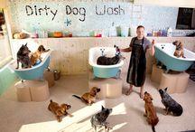 My pet salon