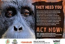 Save Aceh Leuser Ecosystem