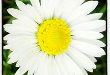 Spring Break / Vos plus belles images du printemps!