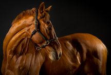 Horse. Equine / by andie jay